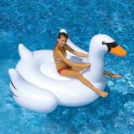 Лебедь белый